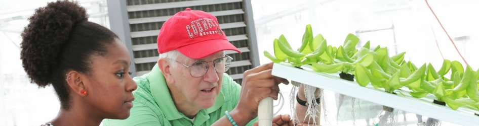 Student and faculty mentor examine plants in greenhouse