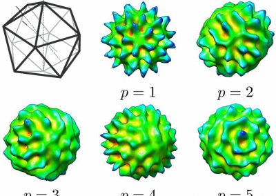 An icosahedron with one of each type of symmetry axis (2-, 3-, and 5-fold) shown and example angular basis functions with l=15 and p∈{1,…Nrep} . More info can be found here http://ieeexplore.ieee.org/abstract/document/7591598/