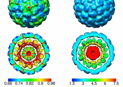 Statistical-characterization-of-ensembles-of-symmetric-virus-particles. More info can be found here http://ieeexplore.ieee.org/abstract/document/7591598/
