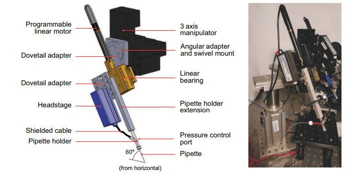 Multi-neuron intracellular recording in vivo via interacting autopatching robots