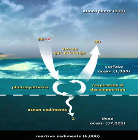 carbon dioxide intake of oceans essay What is carbon dioxide  by means of an explanation and a schematic representation -- move to the carbon cycle applications of carbon dioxide  the oceans, and.