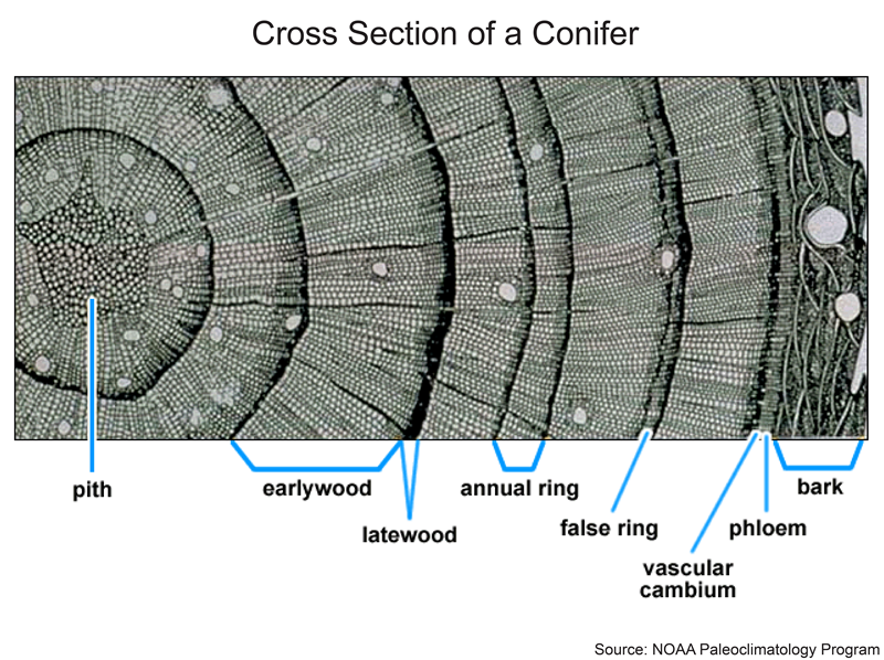 how does tree ring dating work Free download : an introduction to tree-ring dating how does radiocarbon dating work all plants and animals on earth are made principally of carbon during the.