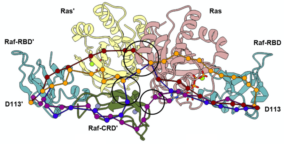 Crystal Structure Reveals the Full Ras–Raf Interface and Advances Mechanistic Understanding of Raf Activation