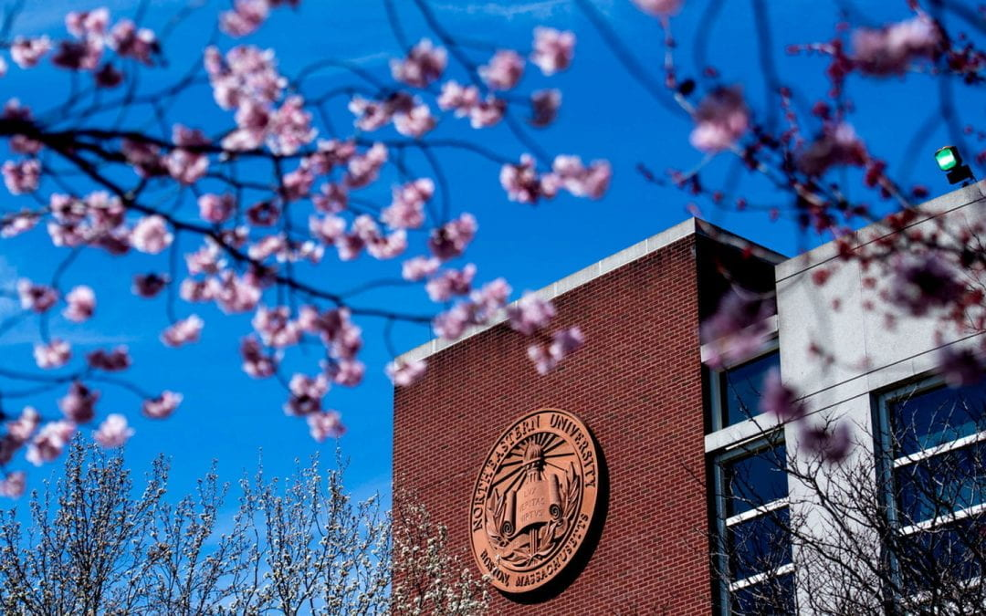 cherry blossoms at northeastern