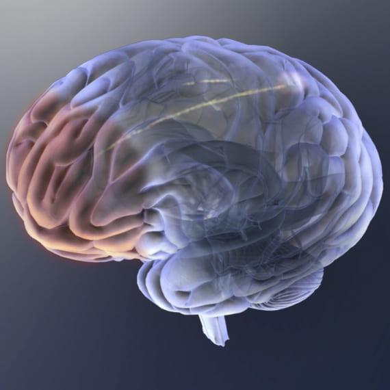 The Brains Blog