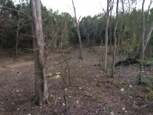 Trees That Have Been Cleared
