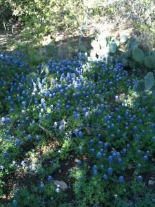 Blunn Creek Bluebonnets