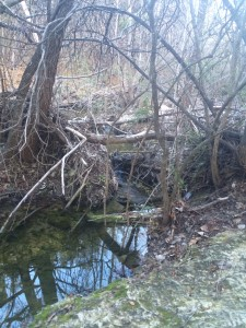 Creek (January)