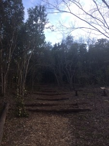 Pathway (January)