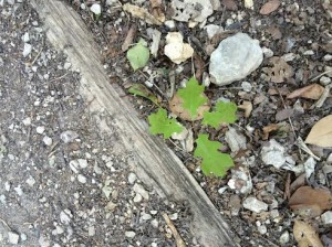 pic4 sprouting leafs