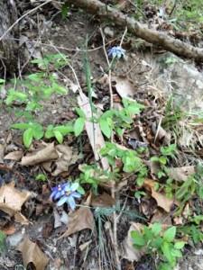 pic8 blue flower