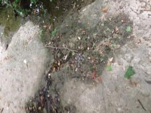 Dry Second Stream