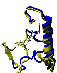 Activation of the C-Jun N-terminal kinase (JNK2) through conformational change from the DFG-out (yellow) to DFG-in (blue) state.