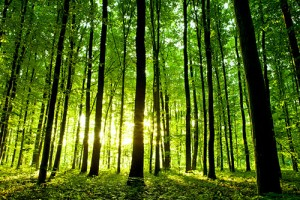 green-trees-forest