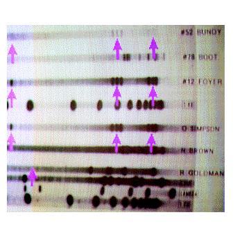 Oj Simpson Dna Evidence dna fingerprinting olivia's blog Oj Simpson Crime Scene Photos