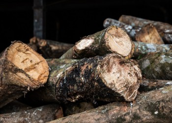 Detail of Logs with Latex