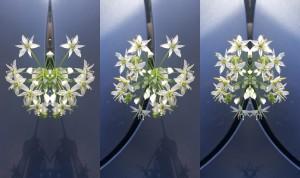 flower-symmetry