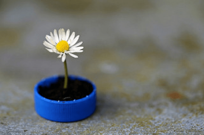 Photo of a flower being grown in a bottle cap