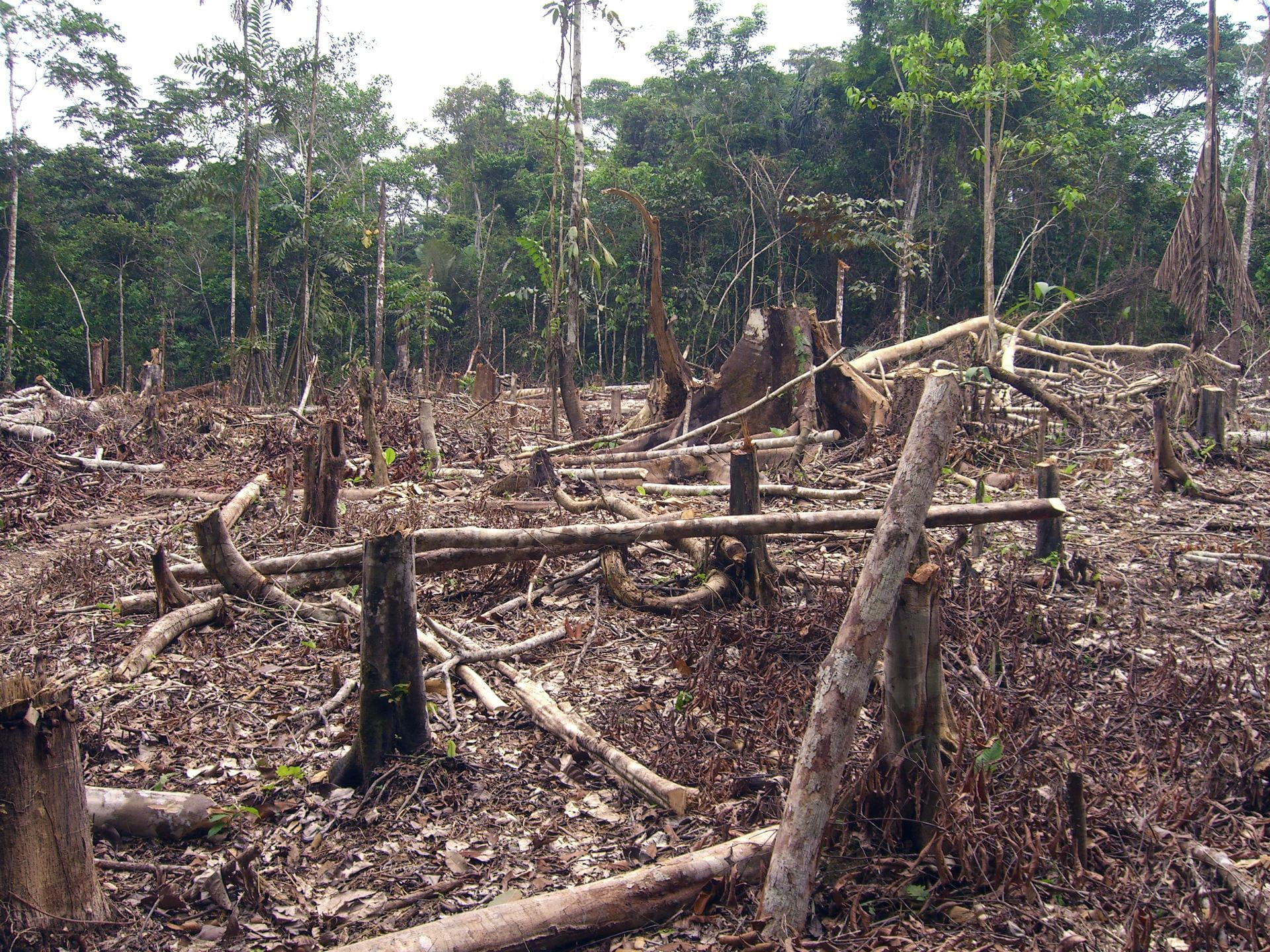 An area of the Amazon rain forest where trees have been cut down and burned.