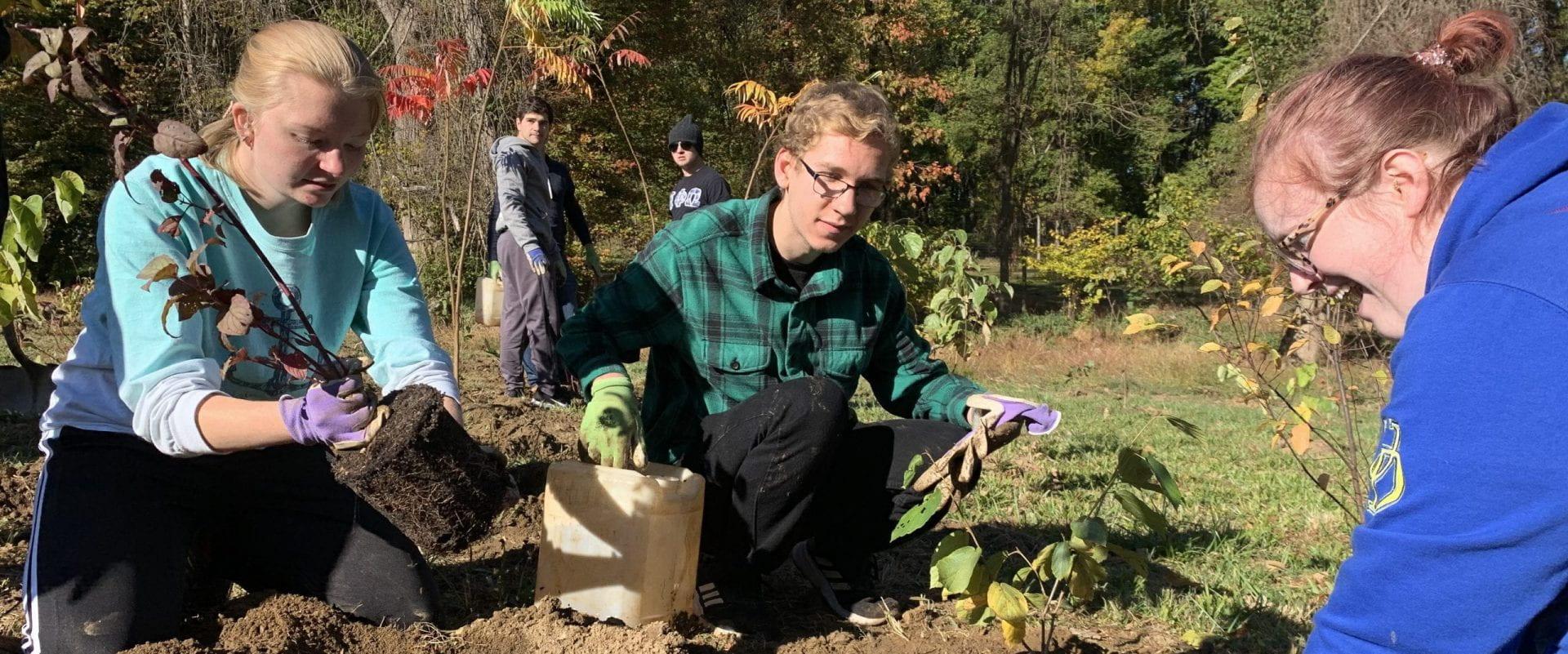 Alpha Phi Omega members kneeling and planting greenery