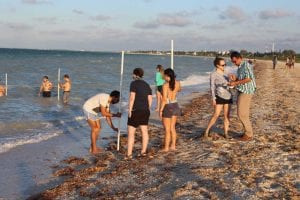 attendees participating in a beach profiling activity along the shoreline