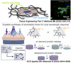 illustration of recent efforts in directing cell-matrix interactions and therapeutic delivery