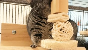 Penelope enjoys a chinchilla-safe toy made of kiln-dried pine, loofah and a willow ball, while sitting in her specialty-made octagonal loft.