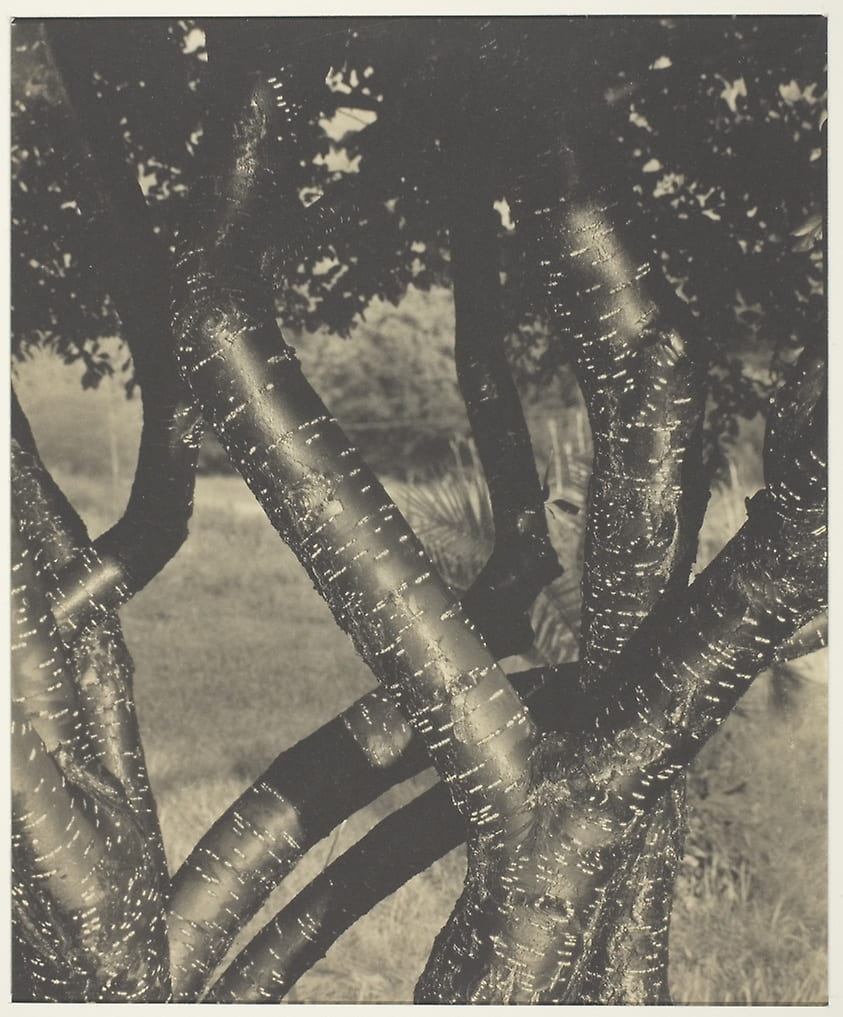 Fig. 9. Photograph of intertwined branches.