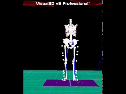 visual3d, motion analysis, zeni, snyder-mackler, musculoskeletal