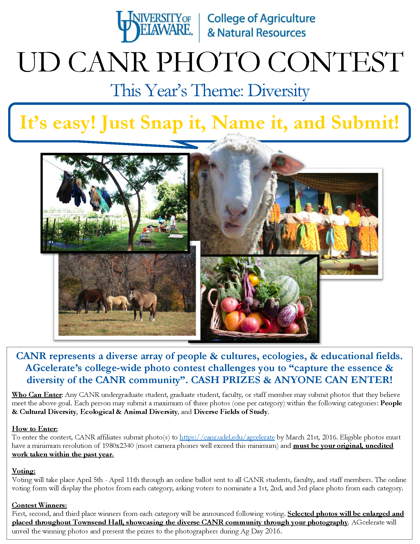 photo contest flyerpdf