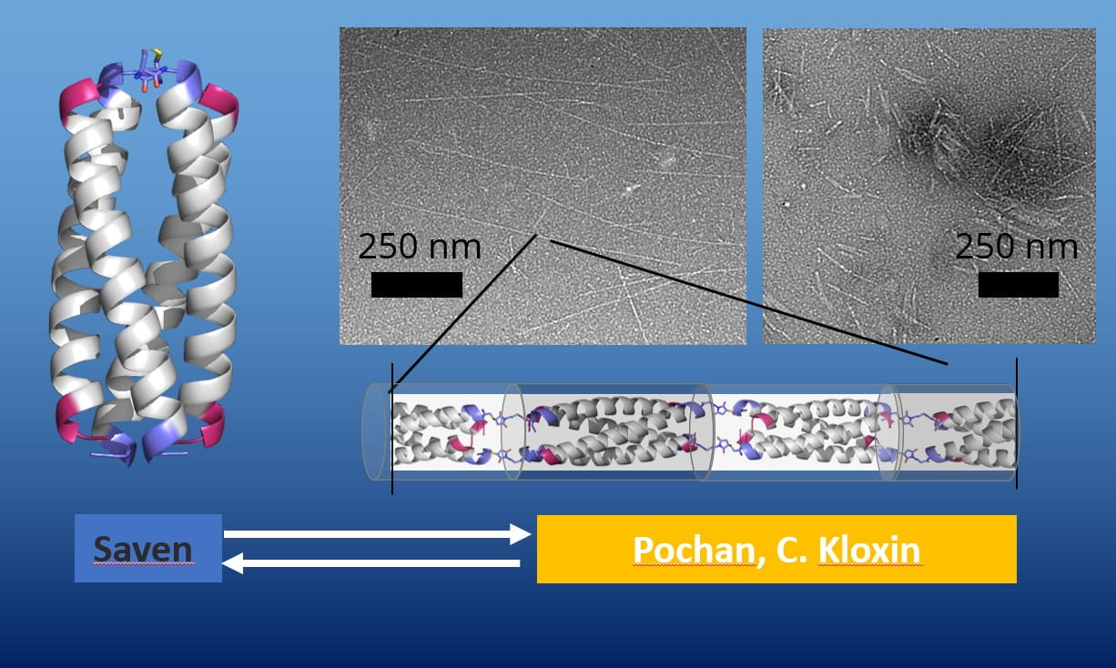 """Saven, C. Kloxin, Pochan, and coworkers, """"Polymers with controlled assembly and rigidity made with click-functional peptide bundles,"""" Nature 574 (2019): 658-662"""
