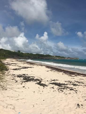 Invasive Seaweed in Barbados | UD Abroad Blog
