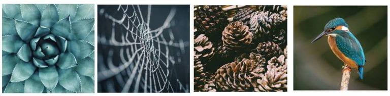 biomimicry picture