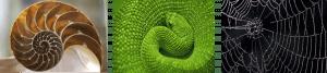 biomimicry photo composite