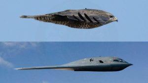 falcon b2 bombird airplane comparisonber comparison