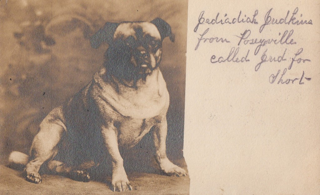 Postcard of Puf the Pug