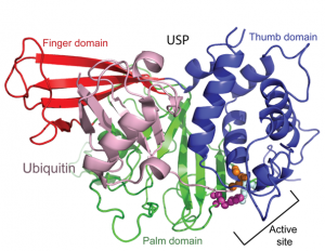 usp structure small