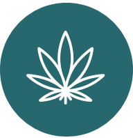 screenu logo in teal with marijuana leaf