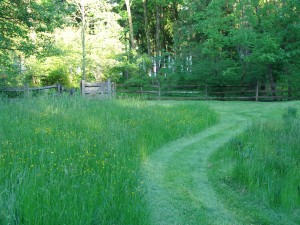 Path mowed in a backyard meadow.