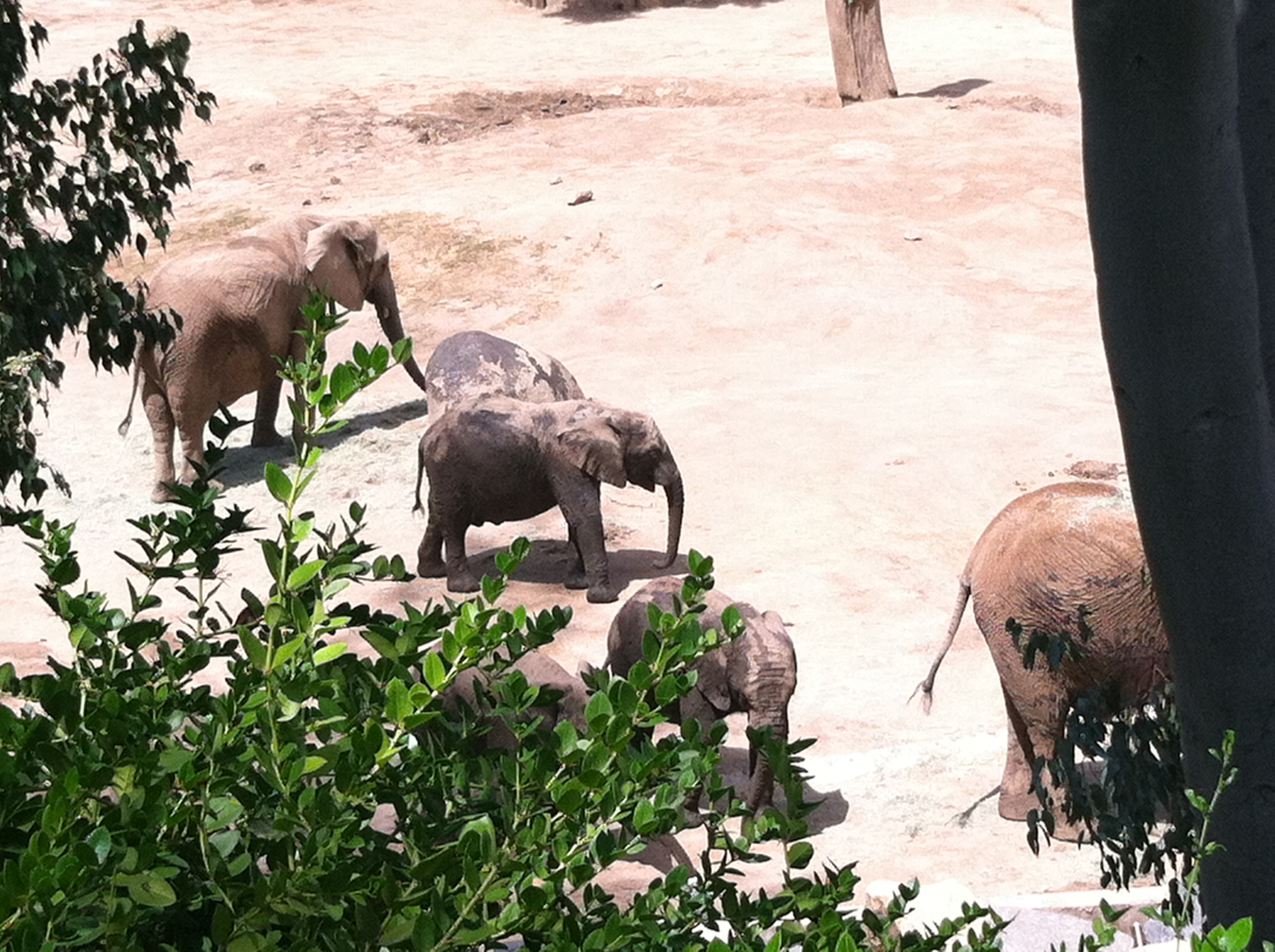 My favorite animals at the San Diego Zoo Safari Park