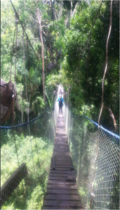Me walking across a canopy bridge up in the trees of the Amazon