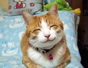 cat-smile