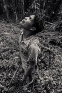 brazil-nut-harvest-684x1024