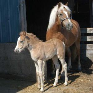 Horse and foal on Webb Farm