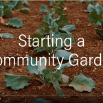 Image of a video titled Starting a Community Garden. Click on the image to open the full video in YouTube.