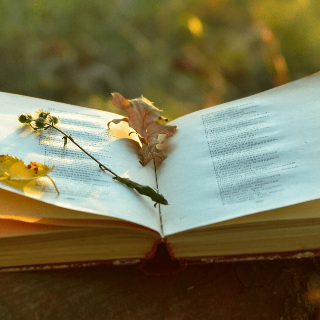 Open book covered in leaves