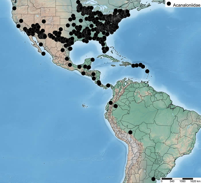 Distribution of Acanaloniidae