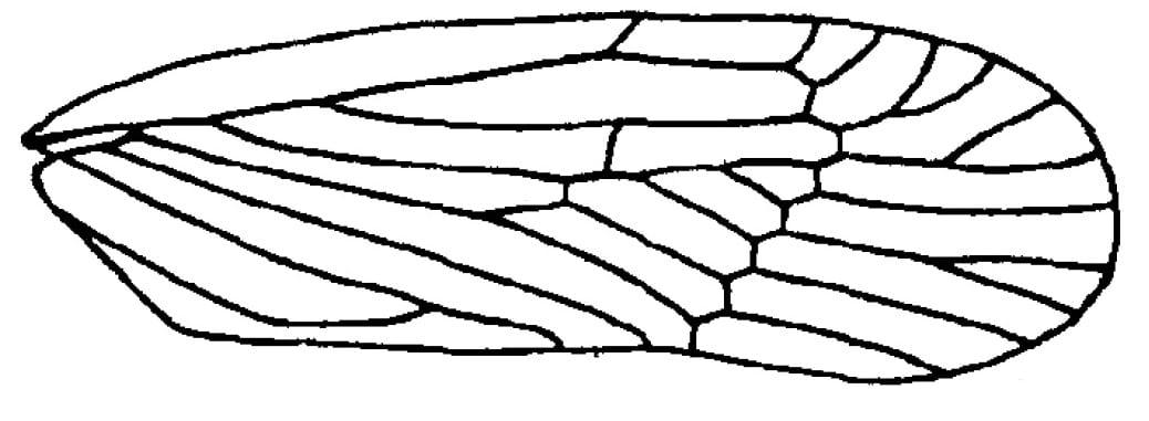 cedusa-medleri-synave-from-em-1996