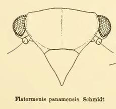 Flatormenis 13