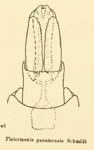 Flatormenis 15